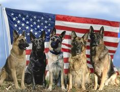 Adopt a military dog* ... Brought to you in part by StoneArtUSA.com ~ affordable custom pet memorials since 2001