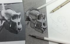How to draw an ape skull   Black & White Ink on Charcoal Background