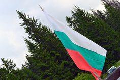 Beauty of #BulgarianNature #Vitosha #Mountain #Bulgaria http://cvetybaby.com/vitosha-mountain/