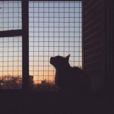 Cristobalito y el atardecer #cristobalito #cat #littlecat #instacat #instagato #gato #gatito #gatos #atardecer #buenosaires #bsas by heybora