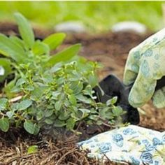 101 Tips, Problem Solvers and Dollar Stretchers for Organic Gardeners: This page divulges 101+ gardening secrets that the pros, retailers, and giant chemical corporations don't want you to know.