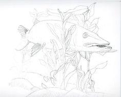 northern pike drawings   Similar Galleries: Northern Pike Drawing , Muskie Art ,
