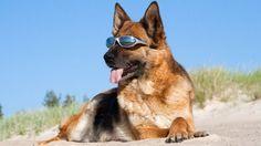 Un Cane con gli occhiali