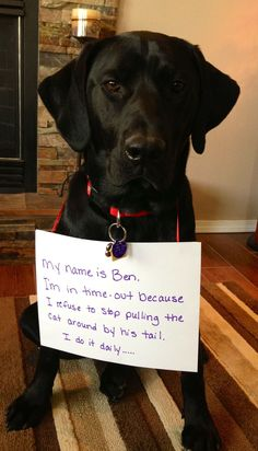 My name is Ben. I'm in time-out because I refuse to stop pulling the cat around by his tail. I do it daily…. #funnydogshaming