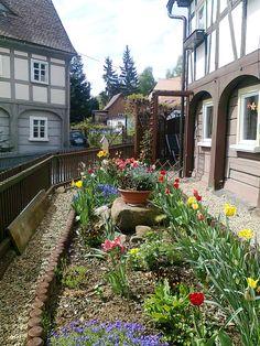 Zahrádka s tulipány