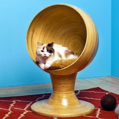 Kitty Ball Bed Bamboo now featured on Fab.