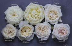 The White Garden Rose Study with Alexandra Farms Garden Rose Bouquet, Garden Roses, Rose Cultivation, French Cottage Garden, Flower Chart, Popular Wedding Colors, Rose Varieties, Types Of Roses, Flower Names