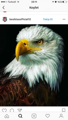 Angry Birds, The St, Bald Eagle, Dear God, Animals, Amen, Feels, Animales, Animaux