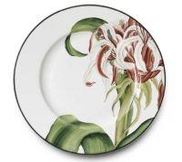 Camelia Crinum Dinner Plate - Alberto Pinto - www.fxdougherty.com