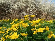 NINIVESKAL: Jarní fotografie je tady a příspěvek k tomu. Blato... Chile, Plants, Plant, Chili, Planets