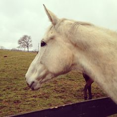 How a horse teaches lesson in relationship and trust building.  #foster #adoption #nonprofit #horses #relationships #horsetherapy #horse #blog