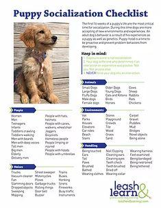 Dog Training Methods, Dog Training Techniques, Puppy Training Tips, Training Your Puppy, Free Training, Potty Training, Training Pads, Training Videos, Training Equipment