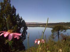 #vacaciones #verano2019 en #VillaPehuenia www.villapehuenia.org #Neuquén #Patagonia Villa Pehuenia, Patagonia, Plants, Vacations, Argentina, Flora, Planters