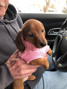 12 Amazing Reasons Dachshunds Are The Cutest Dogs On The Earth - Dachshund Bonus Cute Baby Dogs, Cute Little Puppies, Cute Little Animals, Cute Funny Animals, Cute Dogs And Puppies, Cutest Dogs, Funniest Animals, Dapple Dachshund, Dachshund Puppies