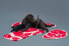 The NIKU RUG by Ma Yansong (Mad Architects) | THE ICONIST #dogs #rug #design