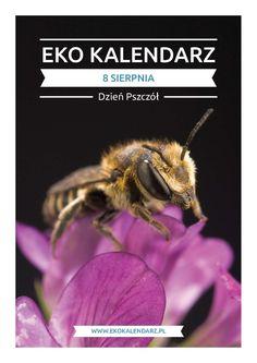 Dzień Pszczół – pakiet edukacyjny