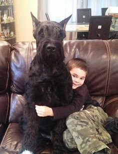 "Figure out even more details on ""schnauzer puppies"". Check out our site. Schnauzers, Giant Schnauzer Breeders, Schnauzer Puppy, Giant Shnauzer, Dressage, Schnauzer Gigante, Black Schnauzer, Dog Yard, Dog Best Friend"