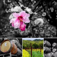 Day in the Napa Valley