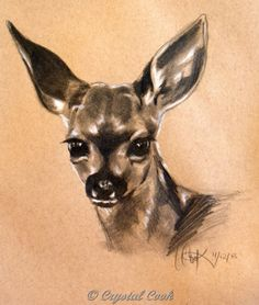 Deer fawn black and white drawing tan paper, painting by artist Crystal Cook
