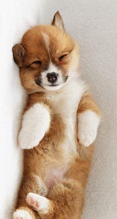 matvrity:  Soooo cute omfg!