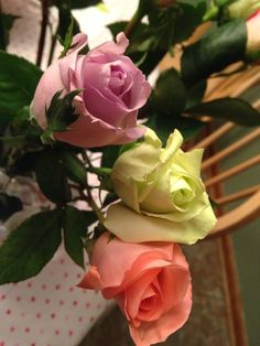3 pastel colored roses Pastel Colors, Roses, Girly, Flowers, Plants, Beautiful, Women's, Pastel Colours, Pink