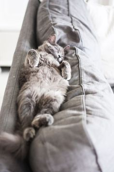 8 Sleeping Positions for Bizarre #Cats