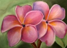 """Plumeria"" - Oil Pastels art by Rose Russell-Herczeg"