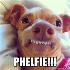 phelfie!!!   Phteven Dog
