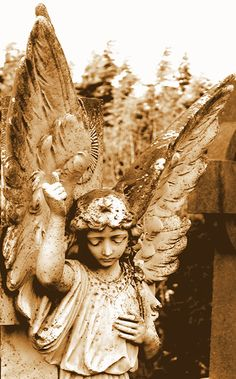 ☫ Angelic ☫ winged cemetery angels and zen statuary - Cemetery Angels, Cemetery Statues, Cemetery Art, Angel Statues, Angels Among Us, Angels And Demons, Entertaining Angels, Angel Sculpture, I Believe In Angels