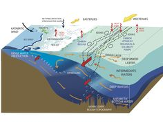 continental shelf water mass에 대한 이미지 검색결과 Continental Shelf, Fresh Water, Charts, Graphics, Graph Of A Function