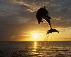 El salto de un delfín al atardecer.