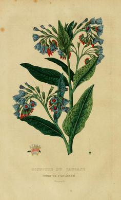 t.3:C-D (1853) - Dictionnaire classique des sciences naturelles : - Biodiversity Heritage Library