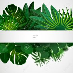 Foliage Stock Photos Images, Royalty Free Foliage Images And Pictures