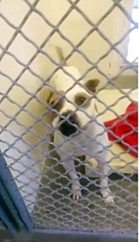 Plea for rescue of a California shelter dog who desperately needs help