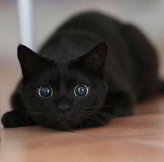 judging by the eyes, I think it's only a few seconds until a cat fit .....