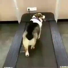 funny dogs with captions ; funny dogs and cats ; funny dogs and cats videos Corgi Funny, Corgi Gif, Funny Dogs, Cute Funny Animals, Cute Baby Animals, Funny Cute, Hilarious, Animals Dog, Cute Animal Videos