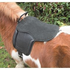 A great little starter saddle for children, this Aviemore leather saddle pad is hardwearing and comfortable. Featuring a suede seat, comfy knee rolls, rolled leather balance strap, stainless steel stirrup bars and stainless steel D-rings. Saddlery Shop, Kids Saddle, Treeless Saddle, Hard Wear, Saddle Pads, Saddles, Pony, Stainless Steel, Leather