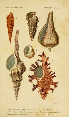 Ilustraciones de mar