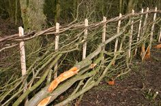 Hedge laying is a skill that we are proud to use here.....