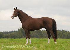 Rodeo Klass - Oldenburg - photos - equestrian.ru