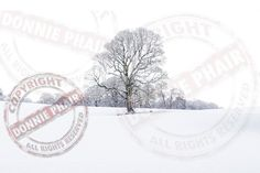 The old oak Tree. Colebrooke Estate in Winter. www.donniephair.com