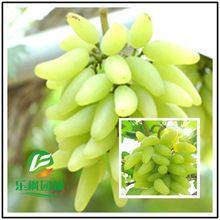 Goldfinger doniczkowe nasion winogron winorośli przetargu i soczyste nasion winogron odmiany 50 nasiona/opakowanie(China (Mainland))
