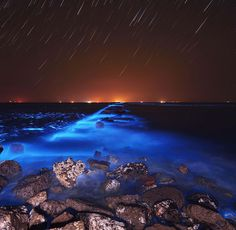 Bioluminescent phytoplankton can create a beautiful blue glow when they are washed to shore as in this picture taken in Dongying, Shandong Province, China. | 22 Facts That Will Change The Way You See Our Planet