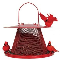 I've always felt seeing a cardinal bird in my yard was a sign of good luck. That bright red bird feeding is a beautiful sight that can bring a...