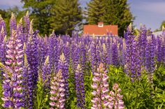 """https://flic.kr/p/tN8JEh 