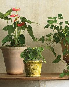 Kiku bachi water basin from japangarden gardening houseplants for any kind of light workwithnaturefo