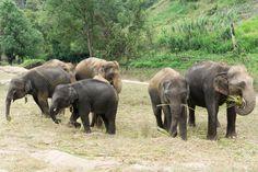 Elephant Jungle Sanctuary in Chiang Mai