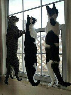 Le trio veut tout voir