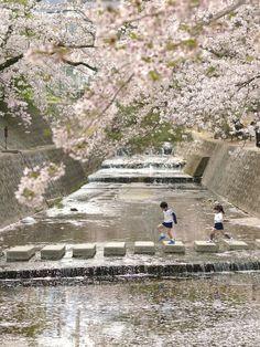 Sakura #japan