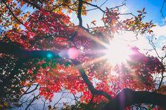 もみじ by vietducpk102 #nature #mothernature #travel #traveling #vacation #visiting #trip #holiday #tourism #tourist #photooftheday #amazing #picoftheday